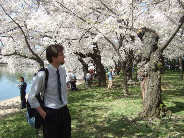 Sideways_at_the_cherry_blossoms